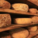 Découverte d'une fromagerie en colo montagne et culture