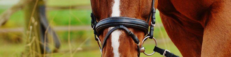 Equitation Colonies Vacances Programme